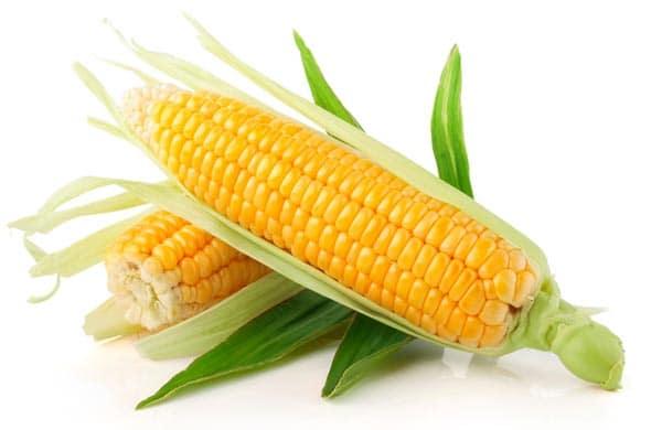 Epis de maïs avec feuilles