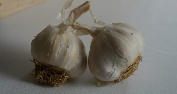 Culture de l'ail : comment planter et entretenir vos ails