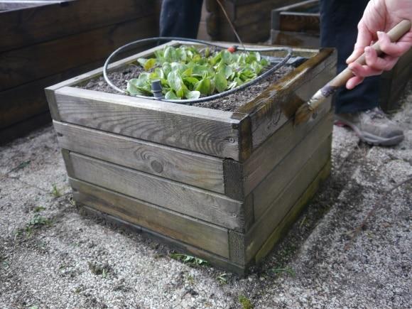 Entretien printanier du potager - Que faire avec du marc de cafe dans le jardin ...