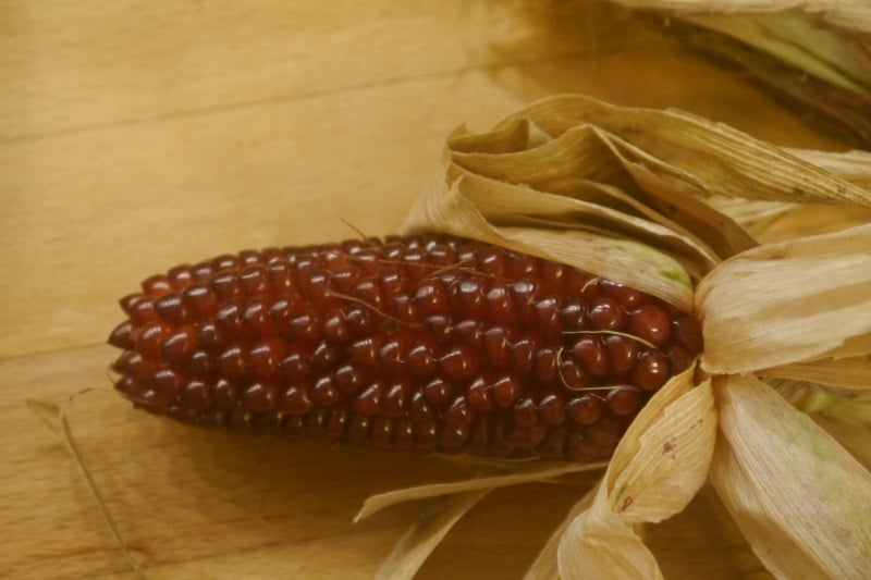 Maïs rouge