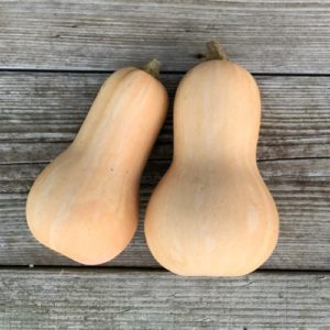 courge-musquee-butternut