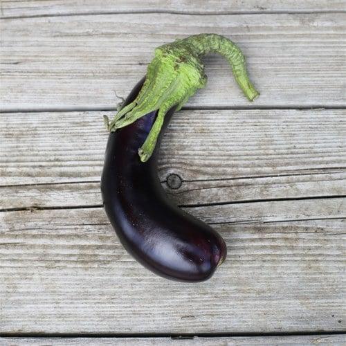 graine aubergine-de-barbentane-ab
