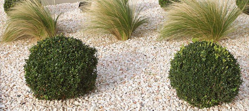 Creer Un Jardin Sec
